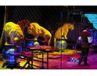 Cirkuszba szeretnék menni!