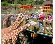 Állatkerti látogatás - Kategória
