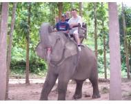 Utazás egy elefánt hátán - Kategória