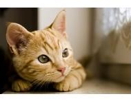 Szeretnék egy kismacskát!