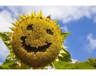 Pozitív gondolkodás életvitel szerűen